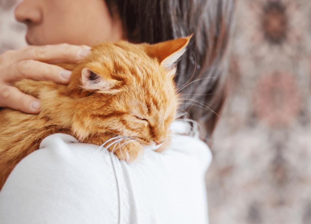cat on a woman shoulder