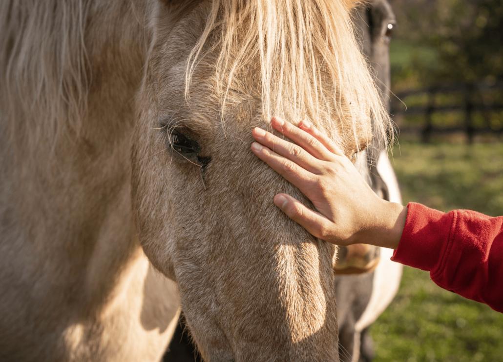 horse getting pet