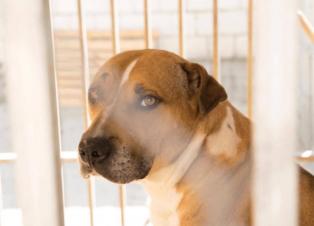 dog inside a cage