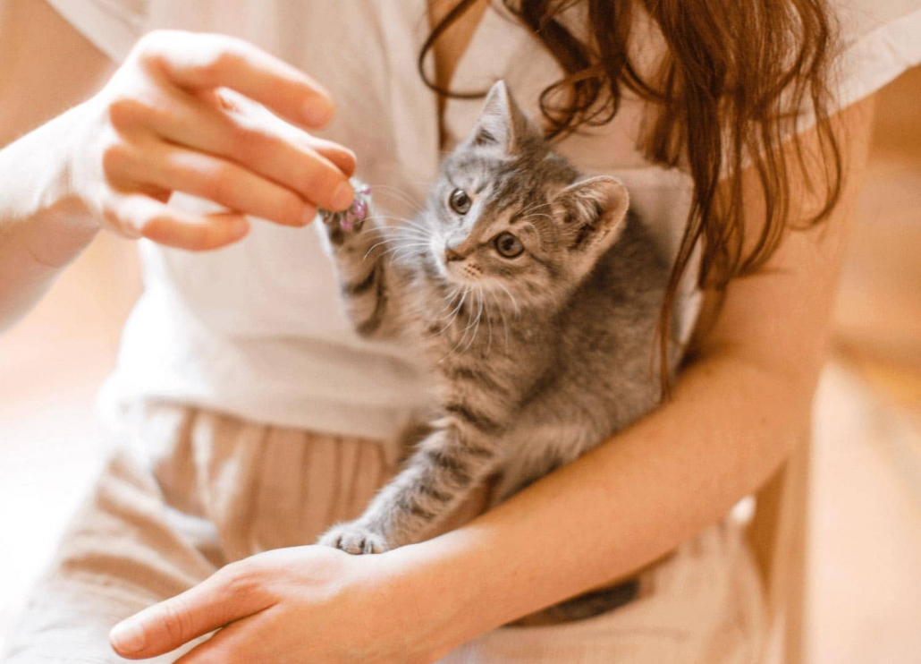 small cat playing with a girl hand